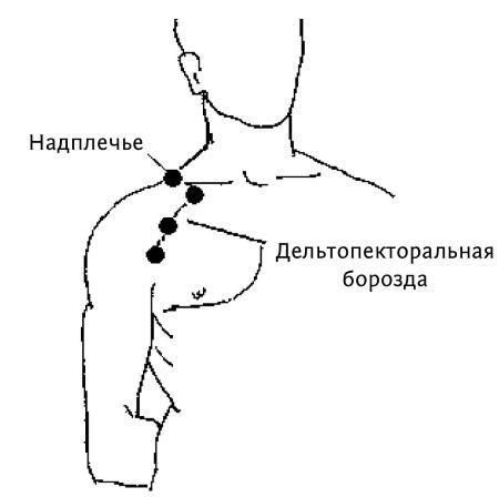 Где находится у человека плечо а где предплечье