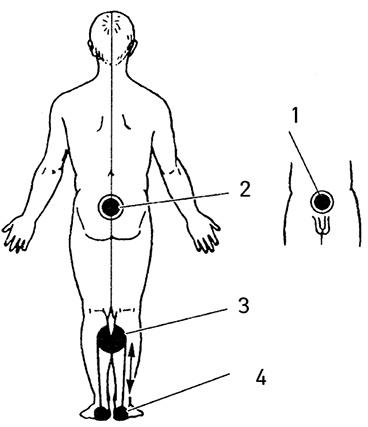 Упражнения для усиления эректильной функции