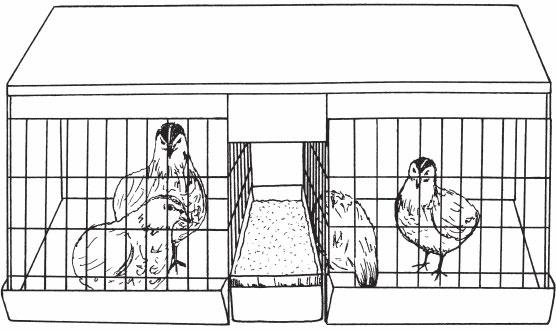 Перепелиная клетка чертежи